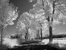 Infrared landscape. Photo was made with an infrared filter Royalty Free Stock Photos