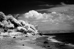 Infrared Landscape. Landscape - sea, beach and sky in infrared Stock Image