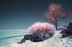 Infrared Landscape. Winter scene shot with an infrared filter Stock Image