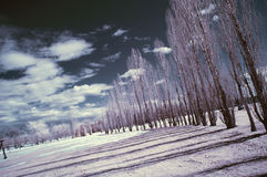 Infrared Landscape. Landscape scene shot with an infrared filter royalty free stock photo
