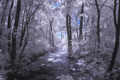 Infrared landscape and details Stock Image