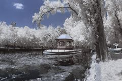 Infrared landscape and details Stock Photo
