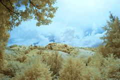 Infrared landscape and details Royalty Free Stock Images