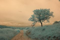 Infrared landscape and details Stock Images