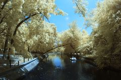 Infrared landscape and details Royalty Free Stock Photo