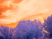 Infrared landscape Stock Photo