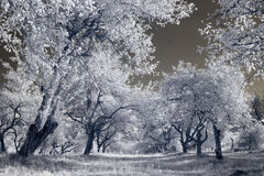 Infrared landscape Royalty Free Stock Photography