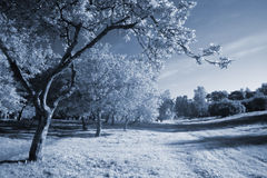 Infrared landscape. Park in blue tones (infrared photo Royalty Free Stock Image