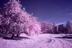 Infrared landscape. Park in magenta tones (infrared photo Royalty Free Stock Photography