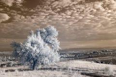 Infrared landscape Stock Images