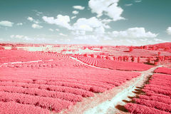 Infrared landscape on a summer day Royalty Free Stock Image
