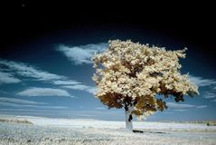 Infrared landscape with tree. Tree on a field photographed with an infrared filter on camera Royalty Free Stock Photos
