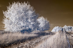 Infrared landscape Royalty Free Stock Images
