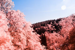 Infrared Landscape Royalty Free Stock Photos