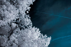 Infrared Landscape with White trees and Water Stock Images