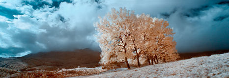 Infrared landscape Stock Photos