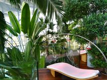 Infrared light therapy and palm trees. Infrared light therapy above the sunbeds and tropical palm trees royalty free stock photos