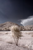Infrared park Stock Images