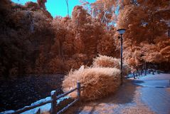 Infrared photo – tree and lake Royalty Free Stock Image