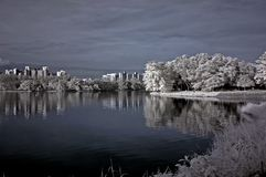 Infrared photo – tree, landscapes and apartment Stock Image