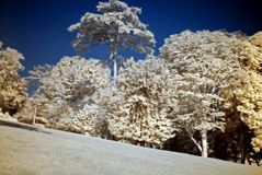 Infrared photo – tree and park Stock Photo