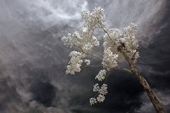 Infrared photo – tree, skies and plant in the pa Stock Image