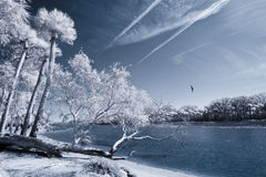 Infrared of beach and palms Royalty Free Stock Photos