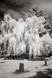 Infrared Photo of a Cemetery Royalty Free Stock Image