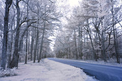 Infared photo of forest road Stock Photos