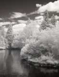 Infrared Photo ofthe Duck Pond at Laurelhurst Park in Portland, Royalty Free Stock Photography