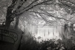 Infrared Photo ofthe Duck Pond at Laurelhurst Park in Portland, Stock Image