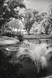 Infrared photo on a pond Royalty Free Stock Photo