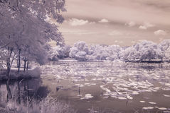 Infrared photo  pond lotus in Public park, bangkok, thailand Royalty Free Stock Photography