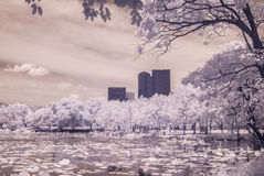 Infrared photo  pond lotus in Public park, bangkok, thailand Royalty Free Stock Photo