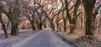 Infrared photo of road and forest canopy Royalty Free Stock Photography