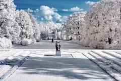 Park in infrared stock photo