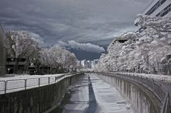Infrared Photo- Tree And Drain Royalty Free Stock Photography