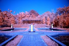 Infrared Photo – Tree And Park Stock Image