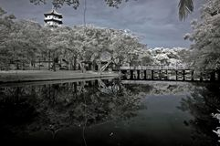 Infrared Photo – Tree, Landscapes And Pagoda Stock Photography