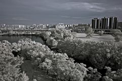 Infrared photo – tree, landscapes and apartment Royalty Free Stock Photography