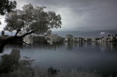 Infrared photo – tree, landscapes and lake Royalty Free Stock Image