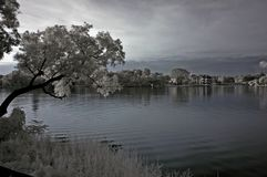 Infrared photo – tree, landscapes and lake Stock Photo