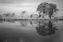 Infrared photo of a tree reflecting in the water Stock Photos