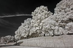 Infrared Photo – Tree, Skies And Cloud In The Pa Royalty Free Stock Image