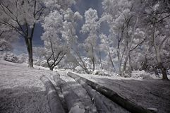 Infrared photo- tree, tree log stock image