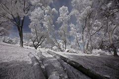 Infrared photo- tree, tree log Stock Image