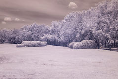 Infrared photo Trees and grass in Public park, bangkok, thailan Royalty Free Stock Photo