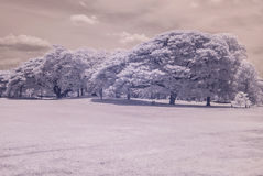 Infrared photo Trees and grass in Public park, bangkok, thailan Stock Photography
