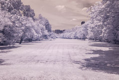 Infrared photo Trees and grass in Public park, bangkok, thailan Royalty Free Stock Image
