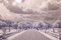 Infrared photo Trees and road in public park, bangkok, thailan Stock Photos